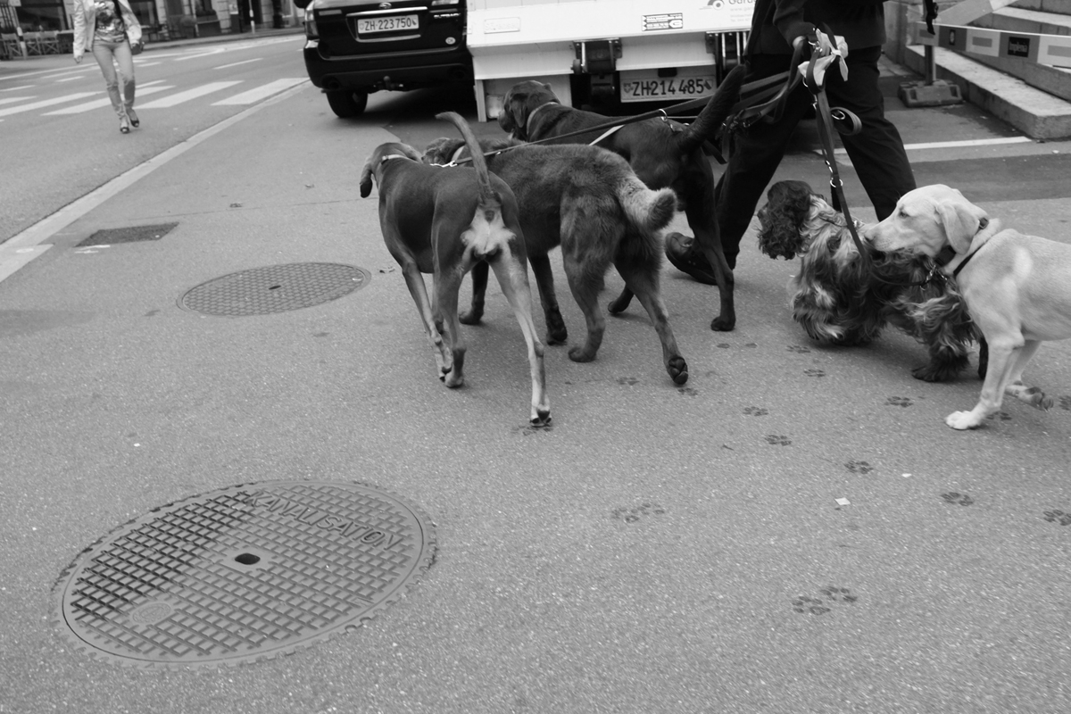dogsitting