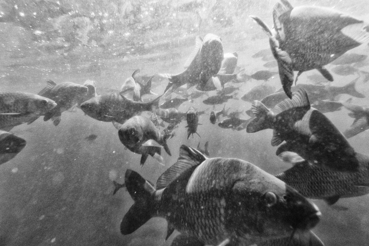 fische im schanzengraben, zürich