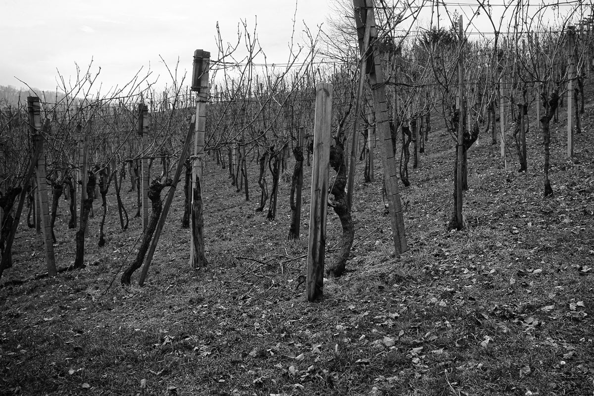 rebberg im winter vor dem schneiden, kanton wallis