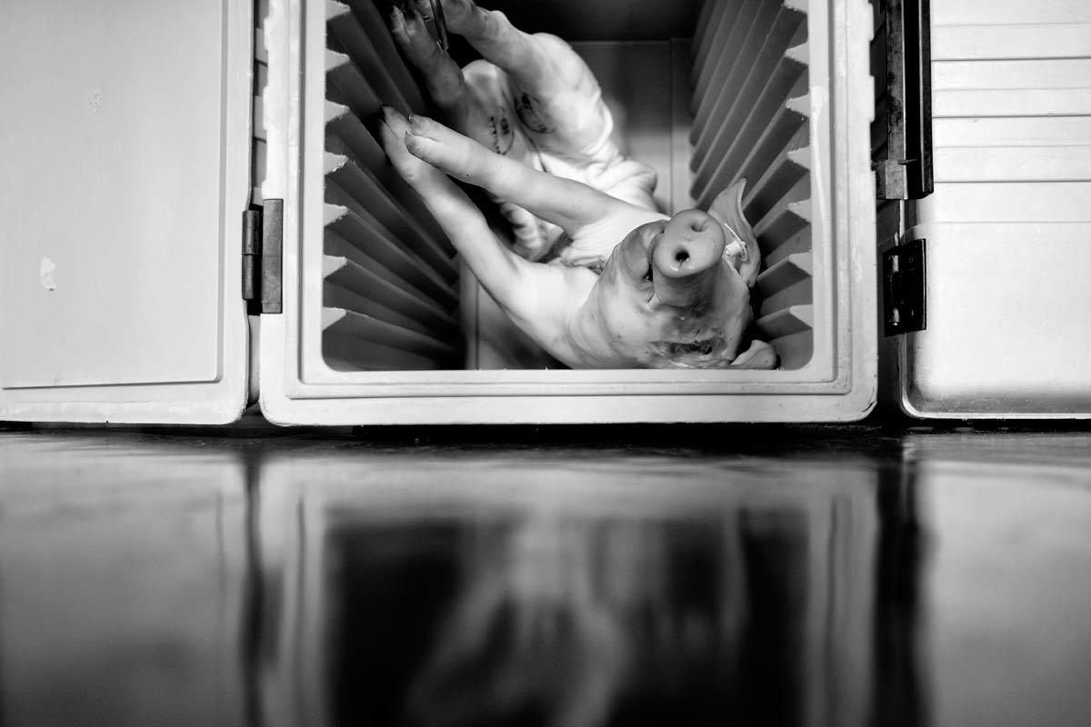 tote sau im kühlschrank