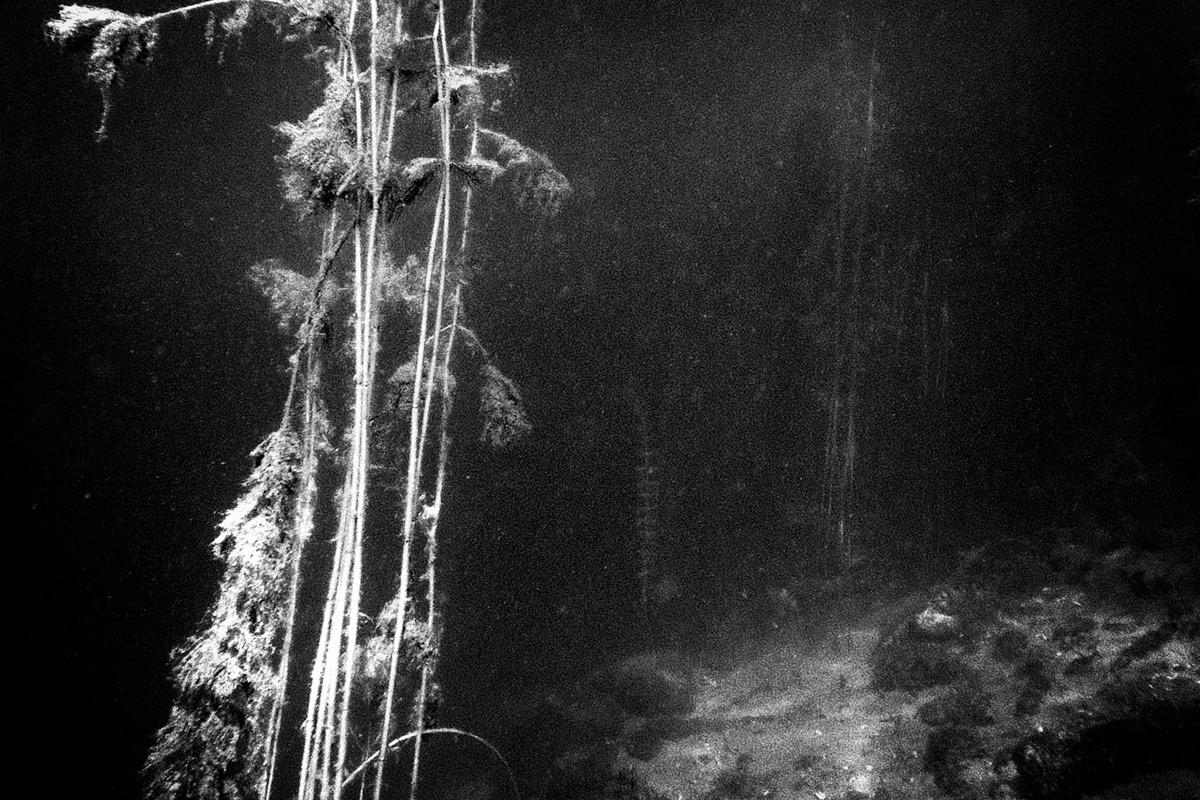 unterwasser, zürichsee, 6 meter unter wasser