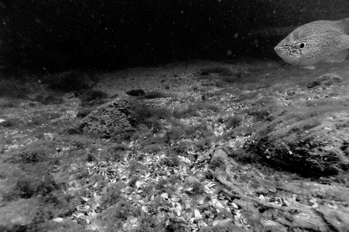 unterwasser, schanzengraben, fisch und muscheln